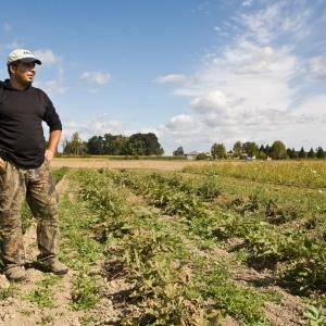 Mike Hashem Owner of Bella Organic Farm on Sauvie Island